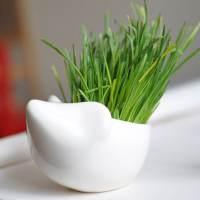 фото Набор для выращивания Eco ёжик