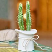 фото Набор для выращивания Eco шляпа