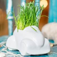 фото Набор для выращивания Eco машина